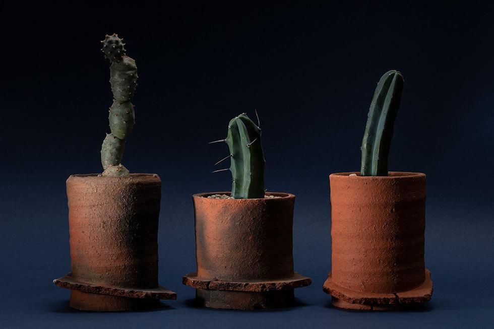 (左から) 植木鉢 -荒城-(テフロカクタス) / 植木鉢 -荒城-(竜神木) / 植木鉢 -荒城-(竜神木)