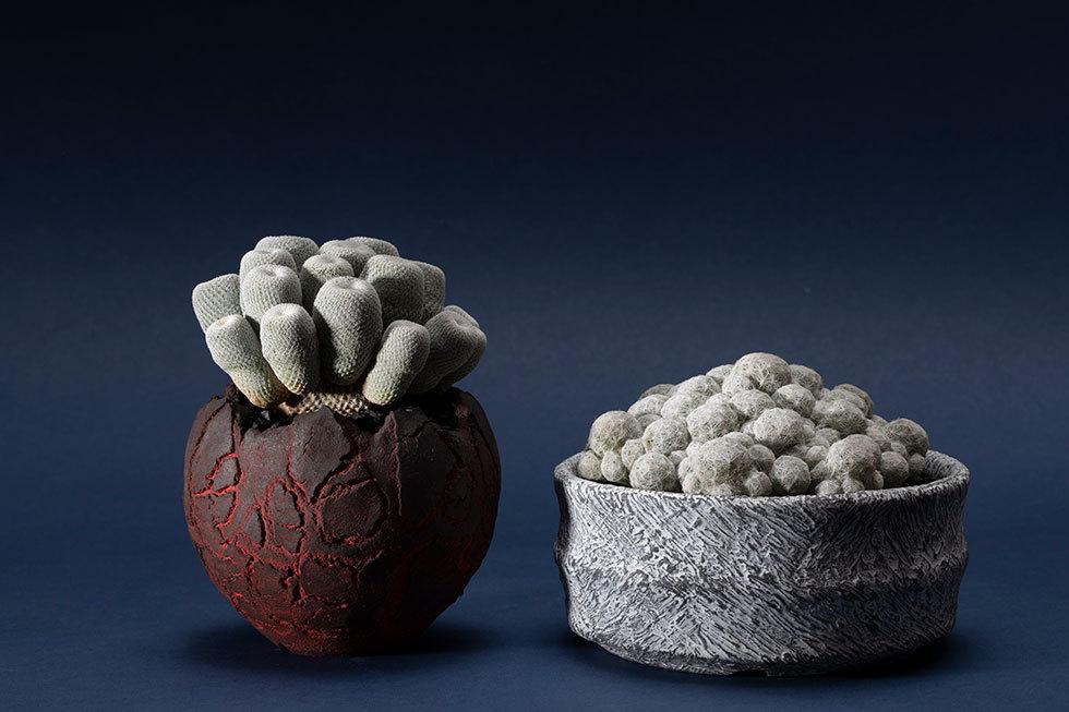 (左から) Opot / エピテランサ属 月世界 / Plaster / マミラリア族 姫春星