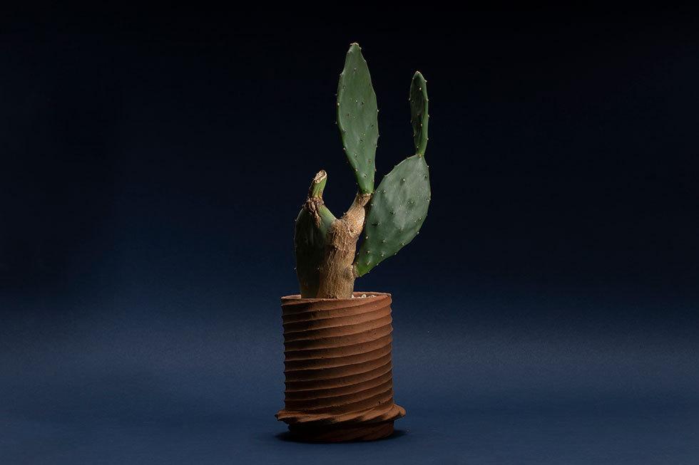 植木鉢 -spiral-(ウチワサボテン)