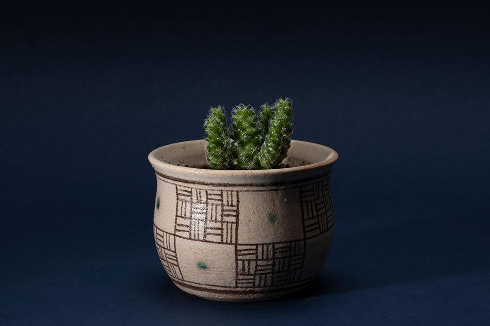 植木鉢「市松文」(ギンデマリ)