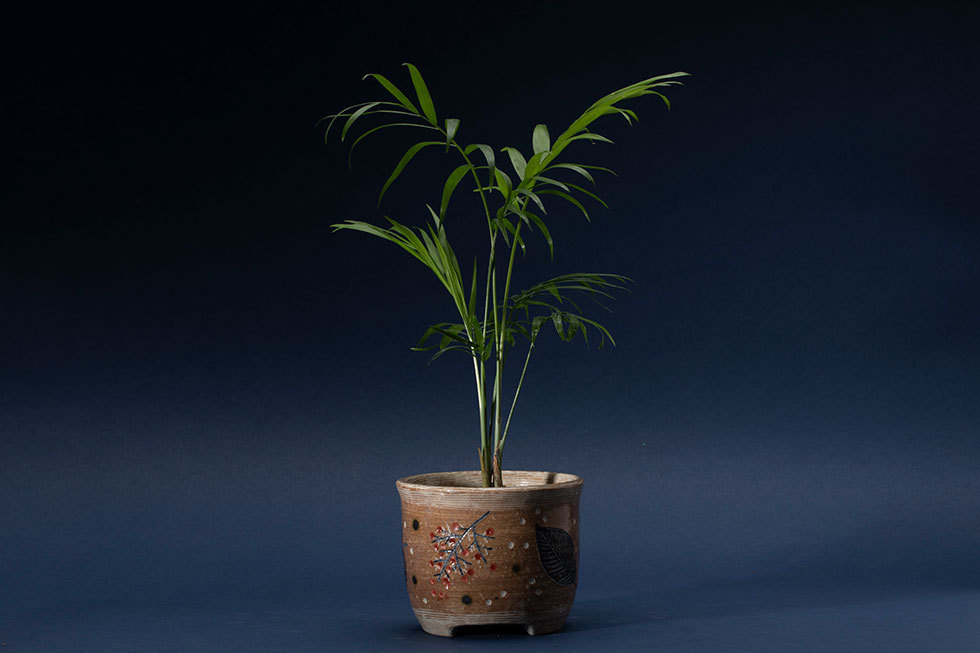 植木鉢「木の葉と実」(ミリオンバンブー)