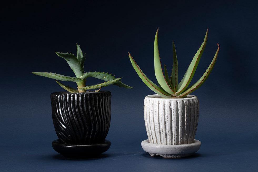 (左から) 鉢 -1 (アロエ)/ 鉢 -2 (アロエ)