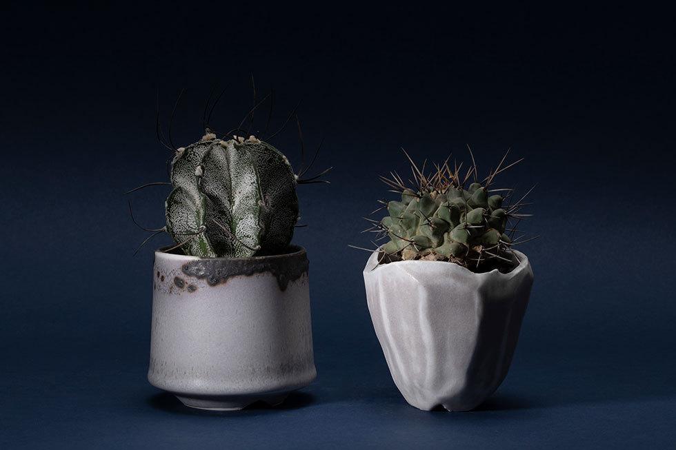 (左から) GOMA pot(アストロフィツム-瑞鳳玉-) / MENTORI shiro pot(テロカクタス-鶴巣丸-)