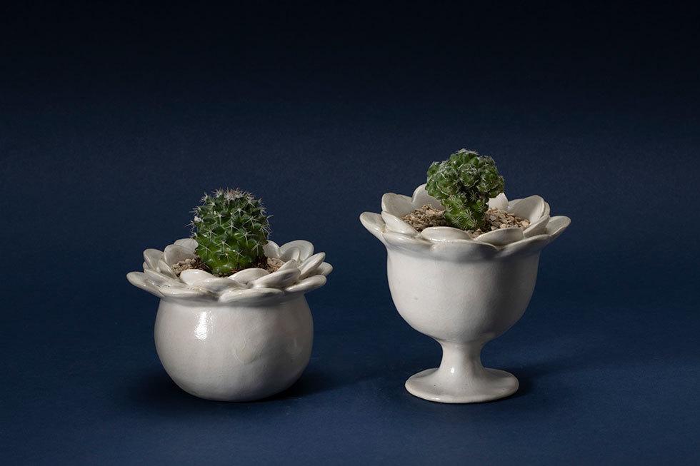 (左から) flower pot (ノトカクタス) / flower pot (ギンデマリ)