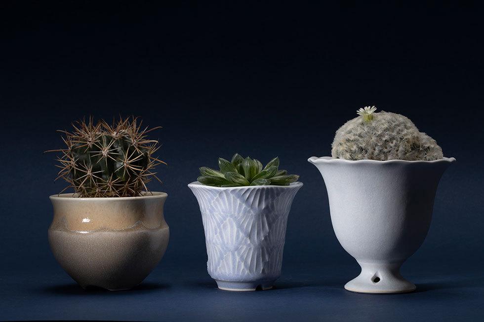 (左から) 植木鉢 -飛砂-(紅洋丸) / 植木鉢 -波の綾-(ハオルチア) / parfait pot(白星)
