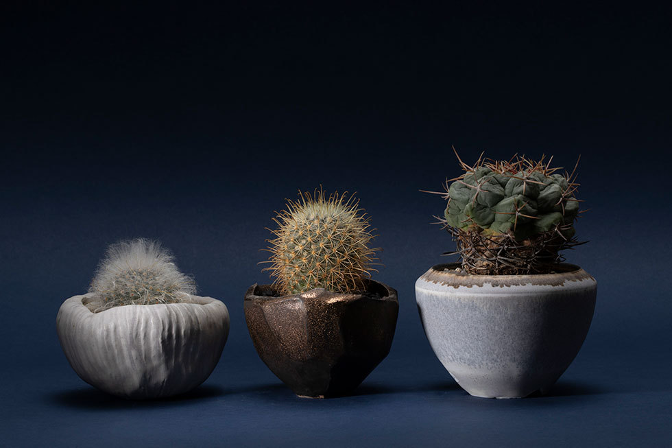 (左から) INKA shiro pot (マミラリア-高砂-)/ 面取マンガンpot(マミラリア-菊慈童-) / GOMA pot(テロカクタス-影武者-)