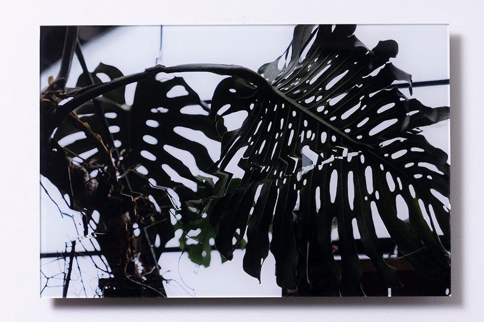 Landscape -big leaf- -大きな葉-