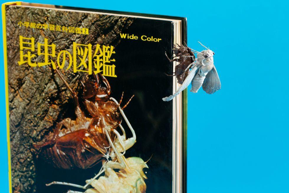 自在羽化蝉 〈昆虫の図鑑〉