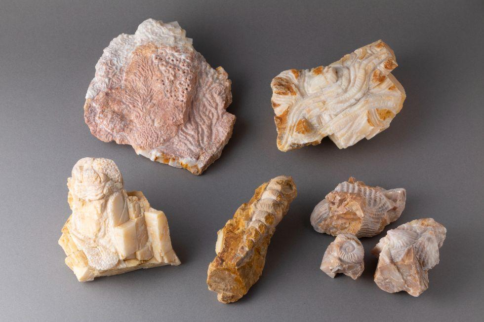 (左上)珊瑚の化石たち / (右上)生き物の痕跡 /  (右下)貝の化石 II / (下中央)巻貝の化石 /  (左下)方解石と海底の生き物 -化石 I -