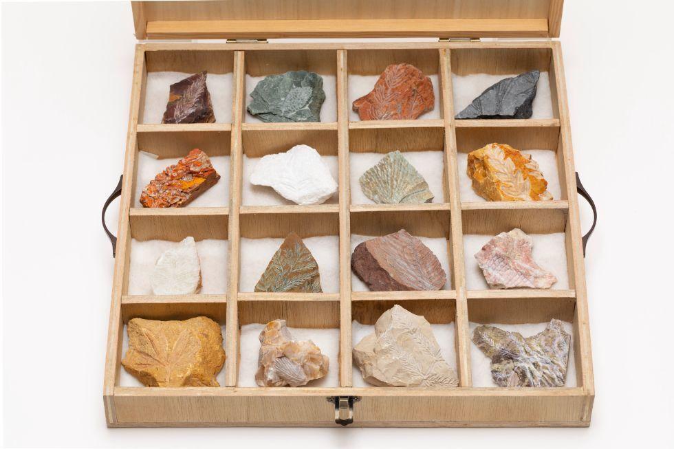 植物化石標本